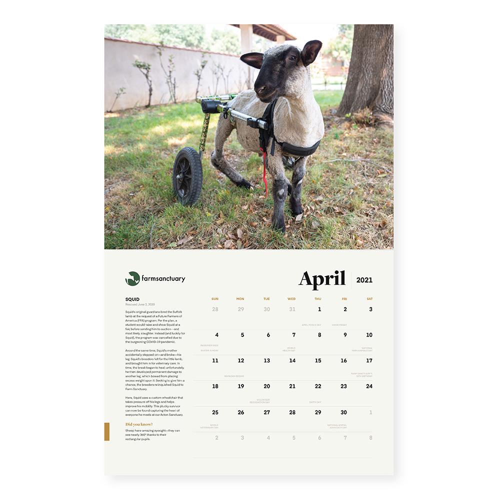Farm Sanctuary's Rescue & Refuge 2021 Calendar