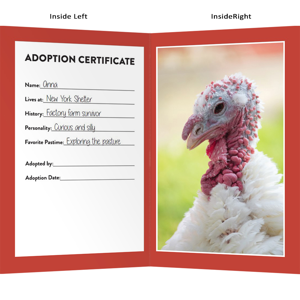 "Adopt Anna Turkey ""The Goofball"" - Farm Sanctuary"