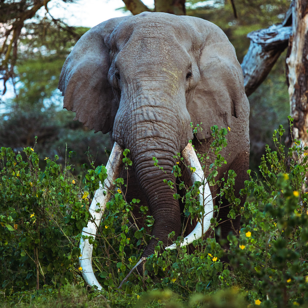 Be a Wildlife Warrior for Elephants