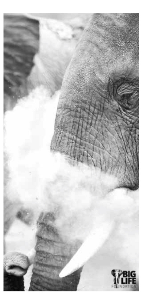 Kenyan Elephant Neck Gaiter - BL119