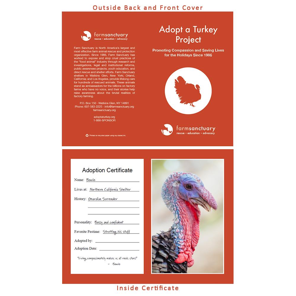 Adopt Bowie the Turkey