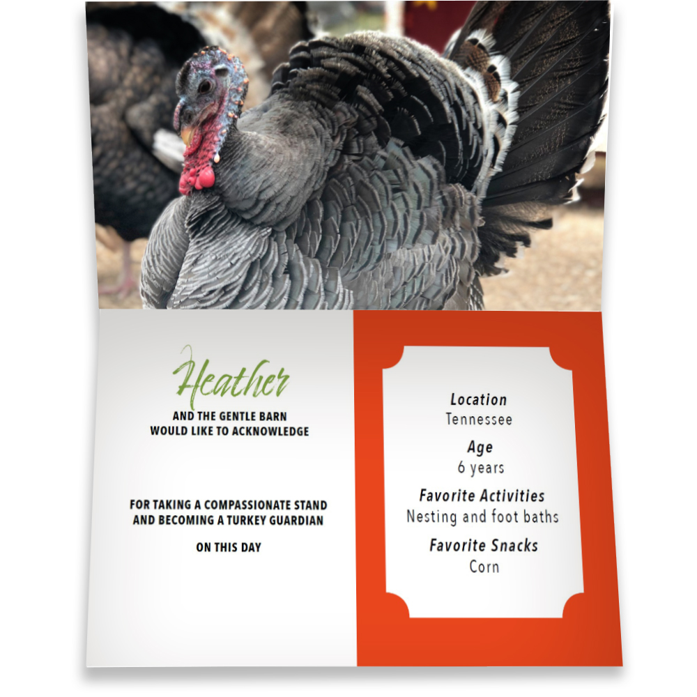Become a Turkey Guardian for Heather - Heather