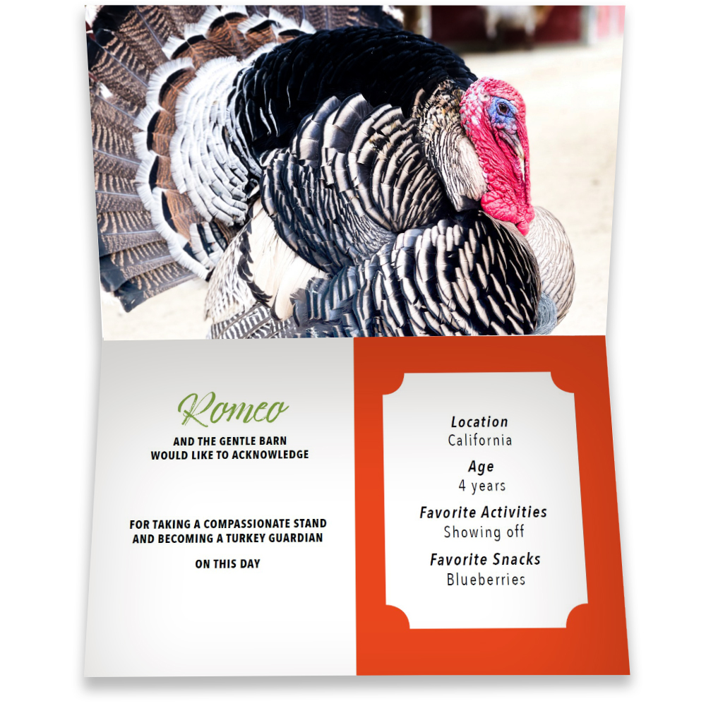 Become a Turkey Guardian for Romeo - Romeo