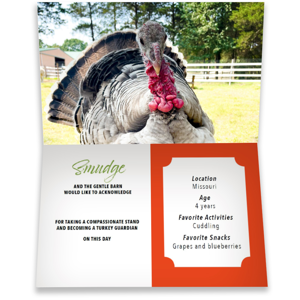 Become a Turkey Guardian for Smudge - Smudge