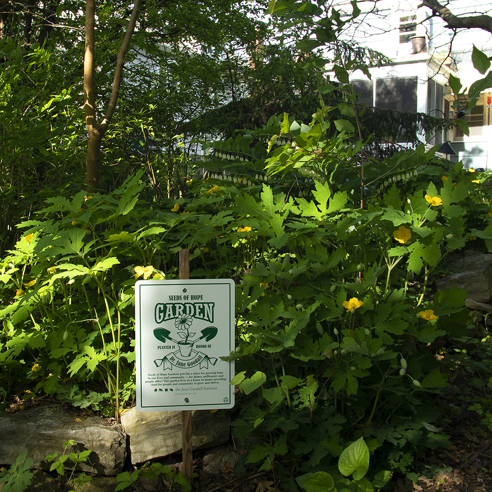 Jane Goodall Seeds of Hope Garden Dedication