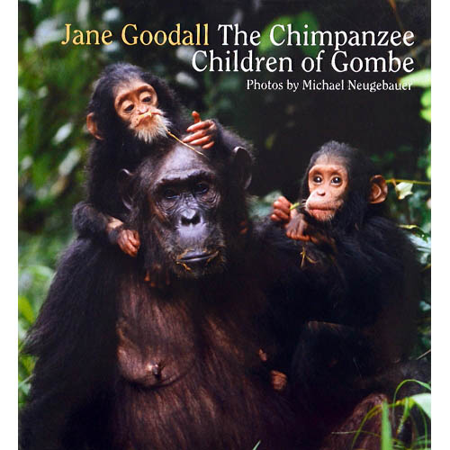 The Chimpanzee Children of Gombe - JGI119