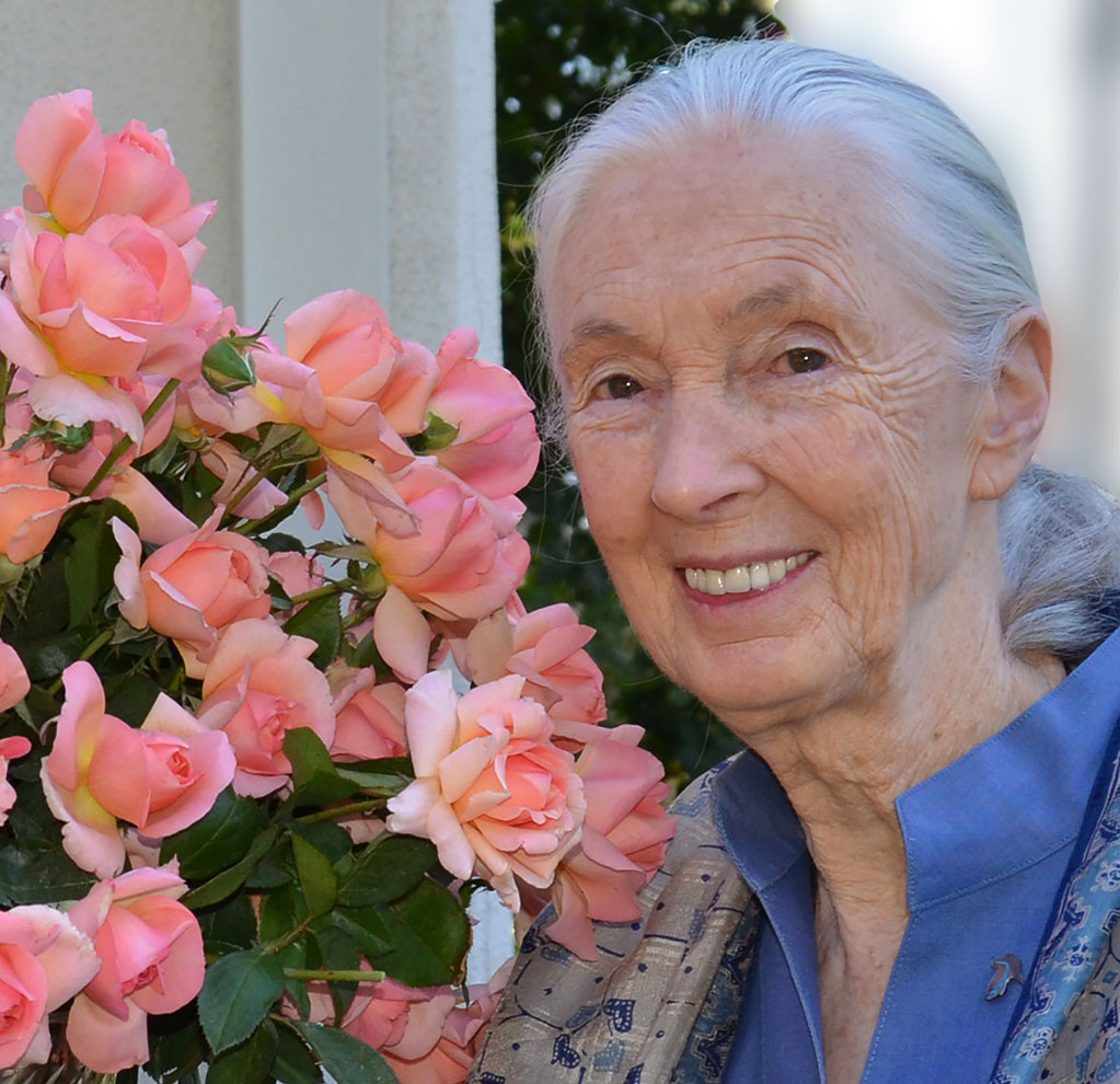 "Jackson & Perkins ""Dr. Jane Goodall Rose"" - JGI169"