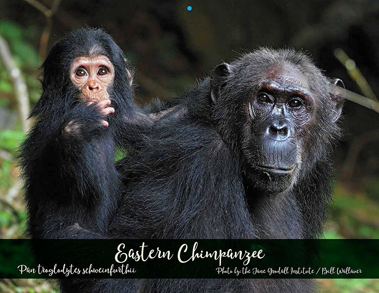 Primate Connections Calendar - JGI171