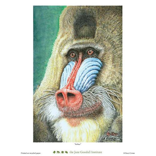 Arthur Art Print by Becci Crowe