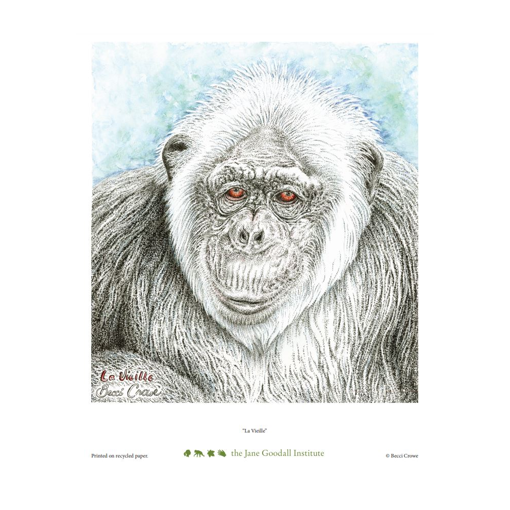 La Vieille Art Print by Becci Crowe