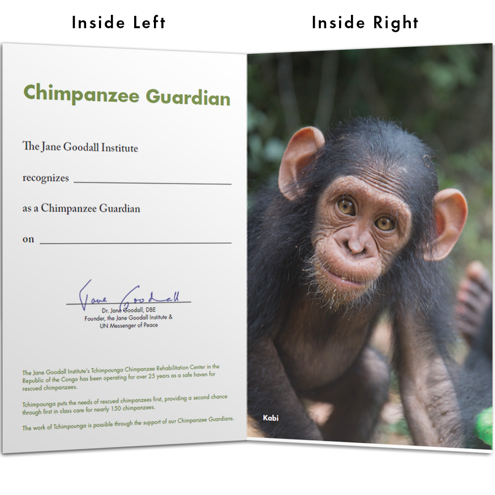 Become a Chimp Guardian for Kabi