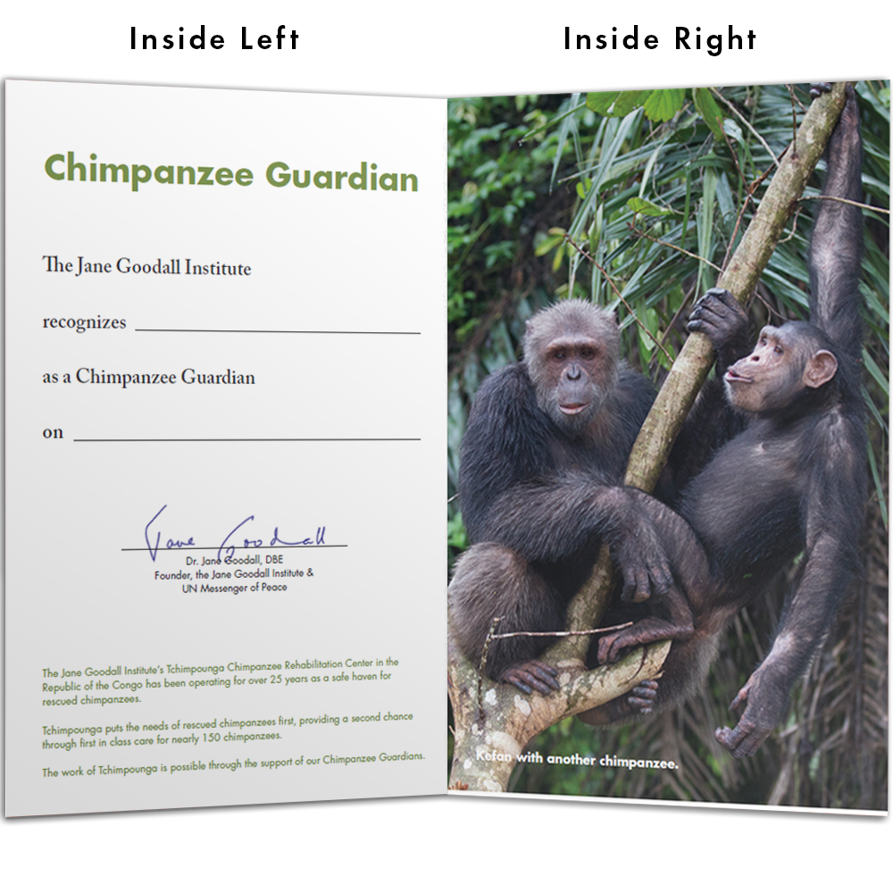 Become a Chimp Guardian for Kefan