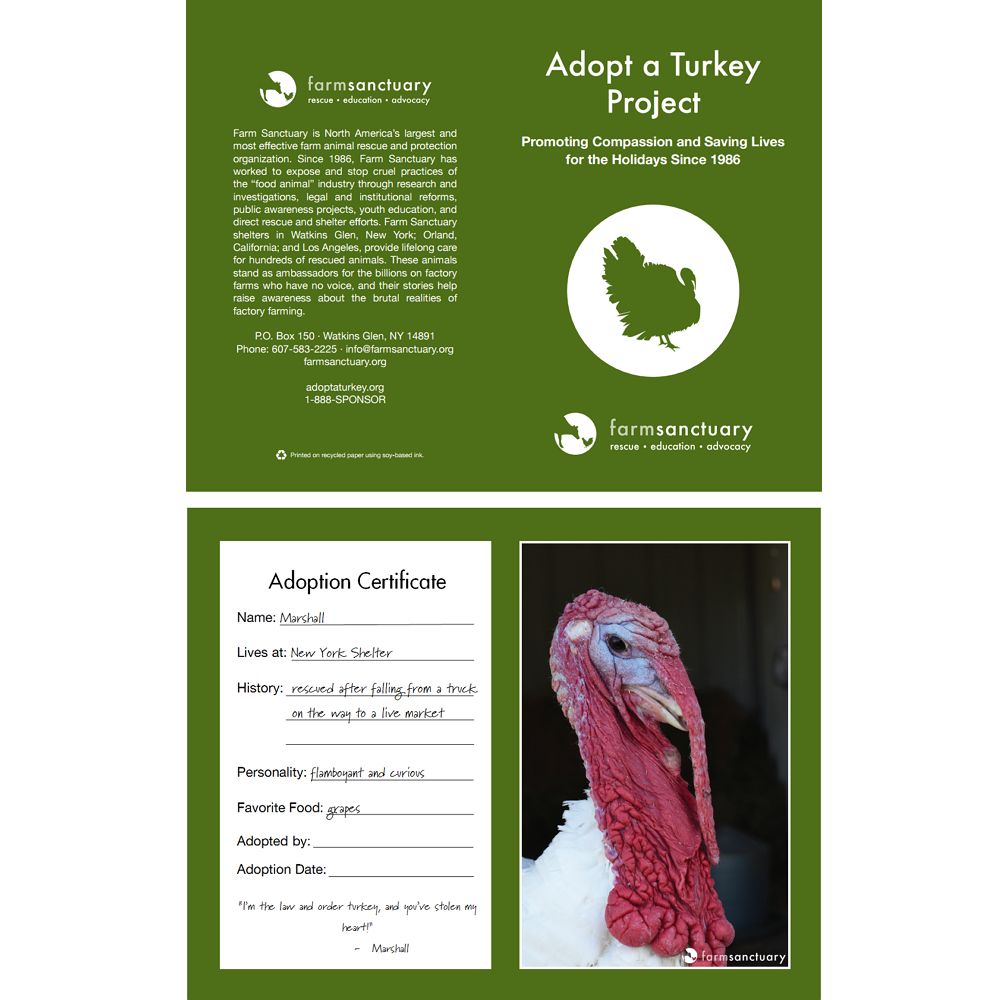 Adopt Marshall the Turkey