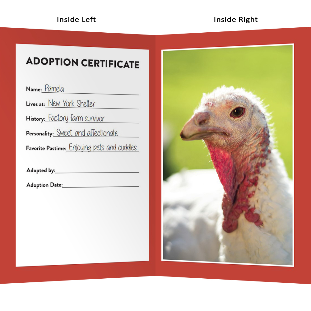"Adopt Pamela Turkey ""The Lover"" - Farm Sanctuary"