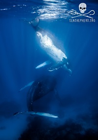 Humpback Whales - Digital Download (Mobile Device Wallpaper)