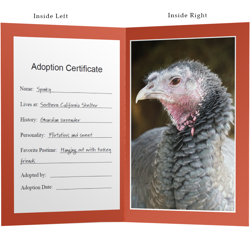 Adopt Spunky the Turkey