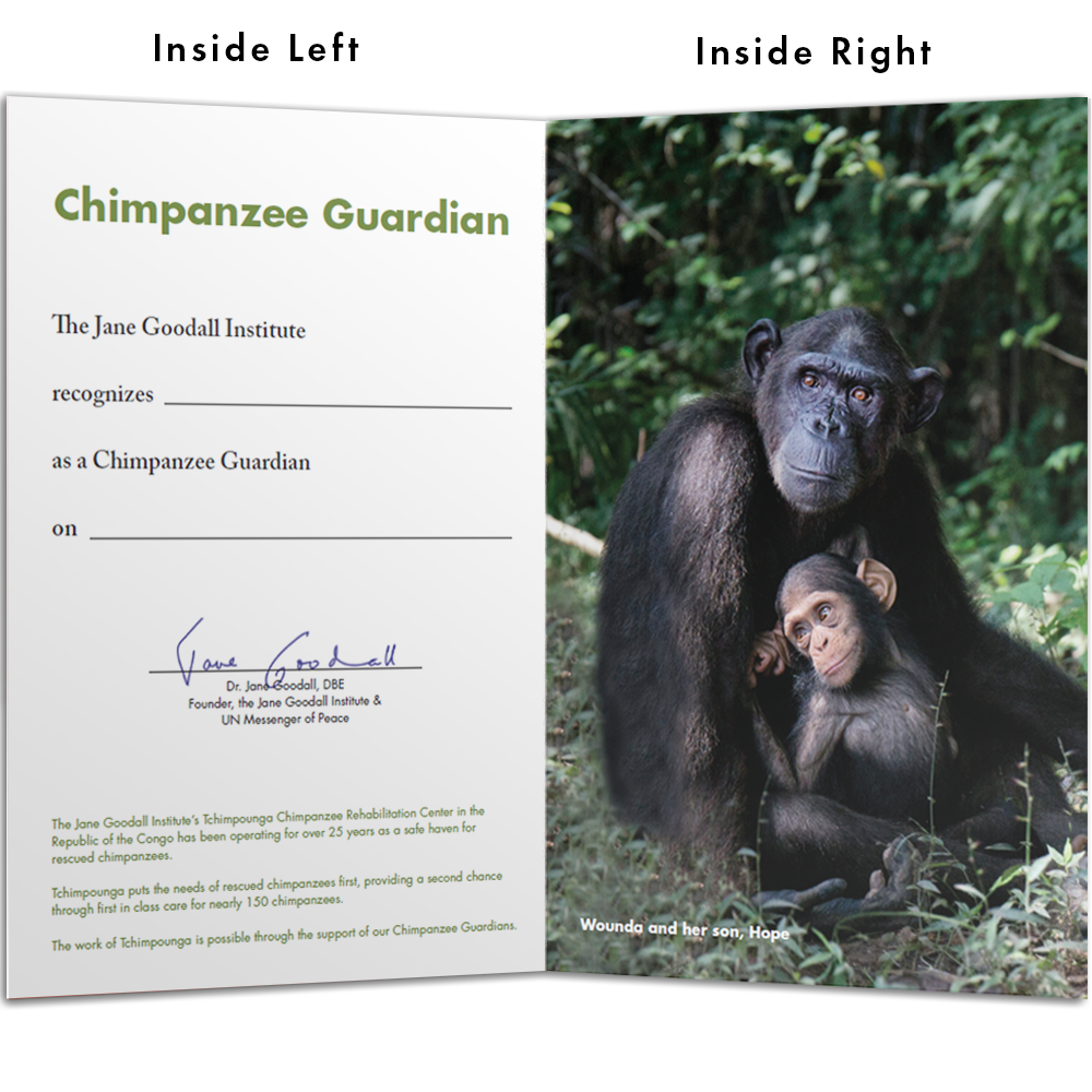 Become a Chimp Guardian for Wounda - Wounda