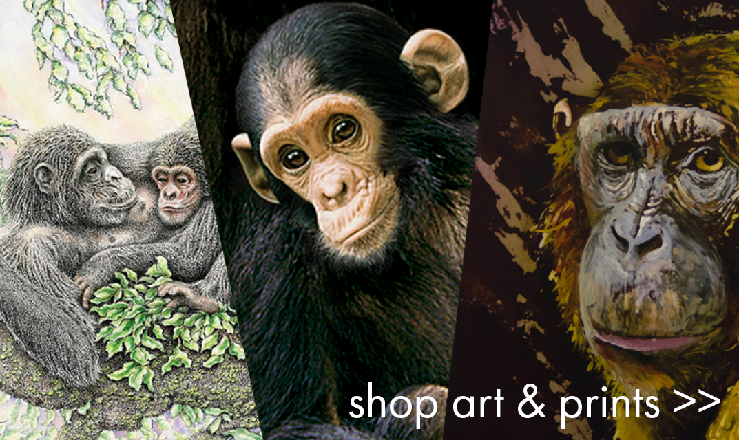 Shop our Selection of Art