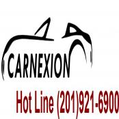 carnexion(carnexion)