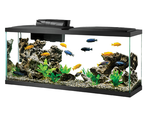 Picture of Aqueon Black Aquarium Tank - 55 Gallon