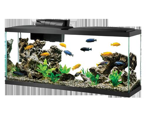 Picture of Aqueon Black Aquarium Tank - 55 Gallon Tank Only