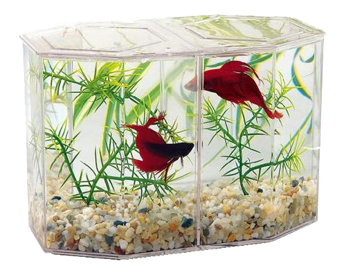 Picture of Lee's Hexagon Duel Betta Keeper - .5 Gallon
