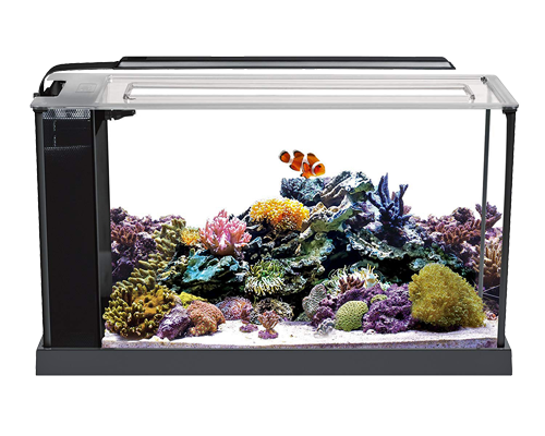Picture of Fluval Evo V Aquarium Kit - 5 Gallon