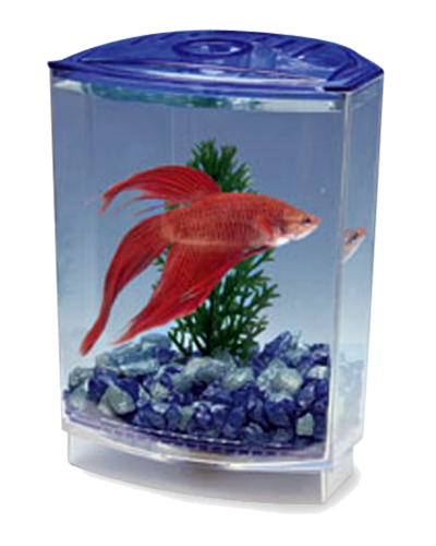 Picture of Pen Plax Betta Tank Kit - .5 Gallon