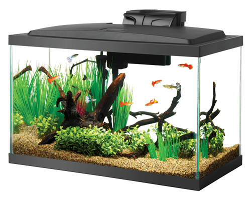 Picture of Aqueon Black Aquarium Tank - 10 Gallon
