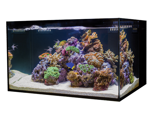 Picture of Cobalt C-Vue Aquarium Kit - 18 Gallon