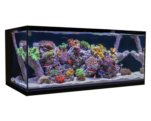 Picture of Cobalt C-Vue Aquarium Kit - 40 Gallon