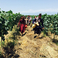 20133 zedahsewalkingthruvineyard johnwurdeman 005