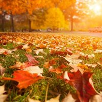 Depositphotos 32426959 stock photo autumn park