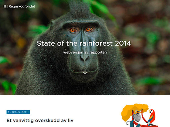 State of the Rainforest - André Elvan