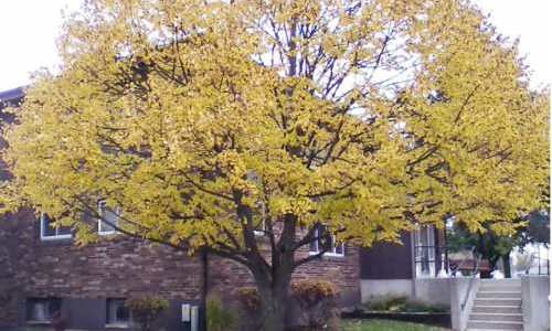 Olde Mill Apartments Monticello IN
