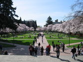 University of Washington-Seattle Campus image