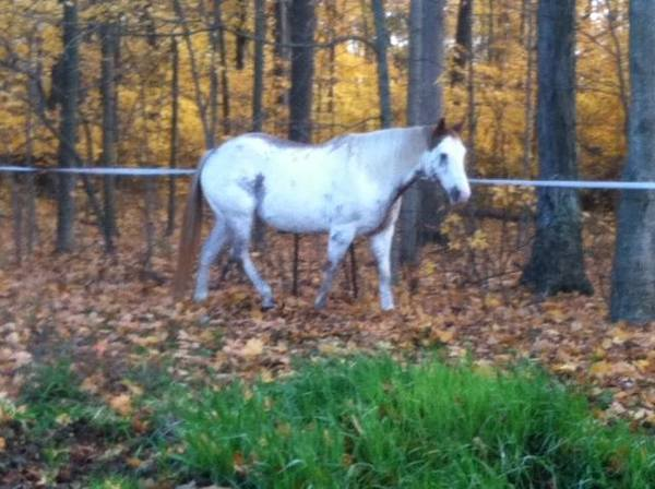 horse in the fall