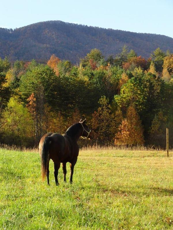 beautiful autumn horse