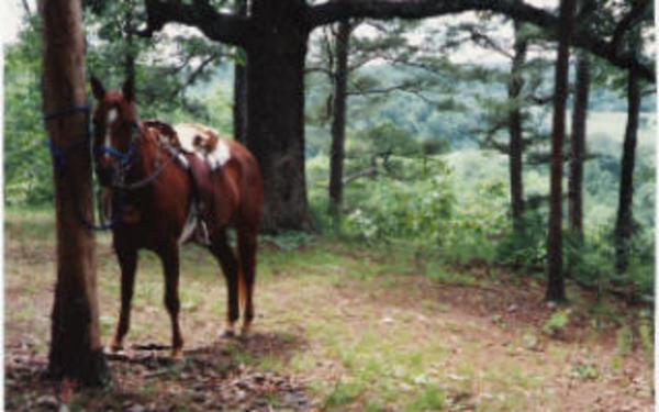 beautiful horse hiking