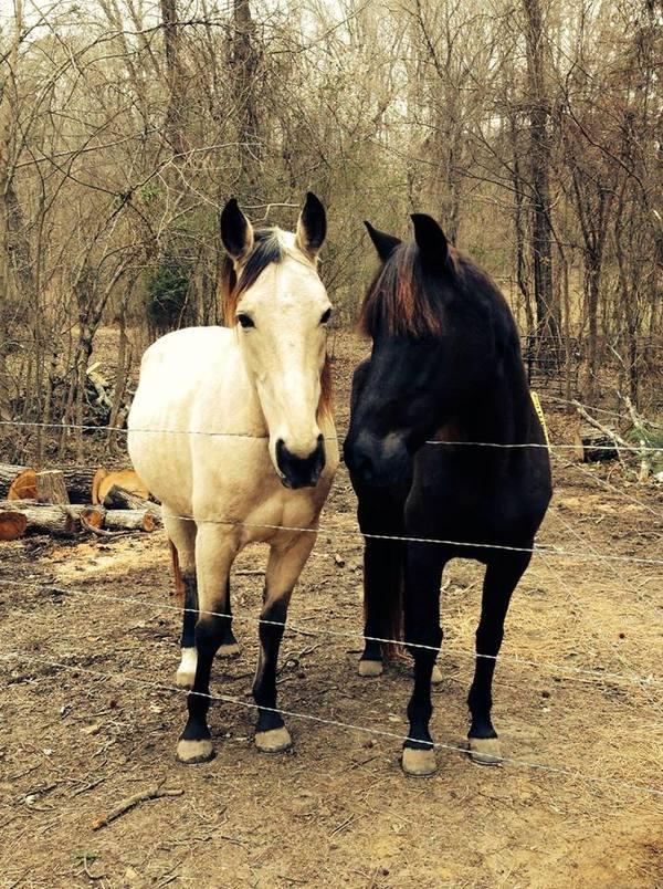 two beautiful horses