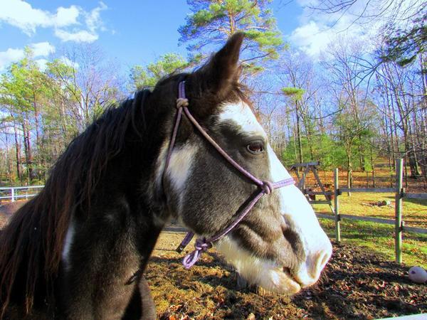 awesome horses
