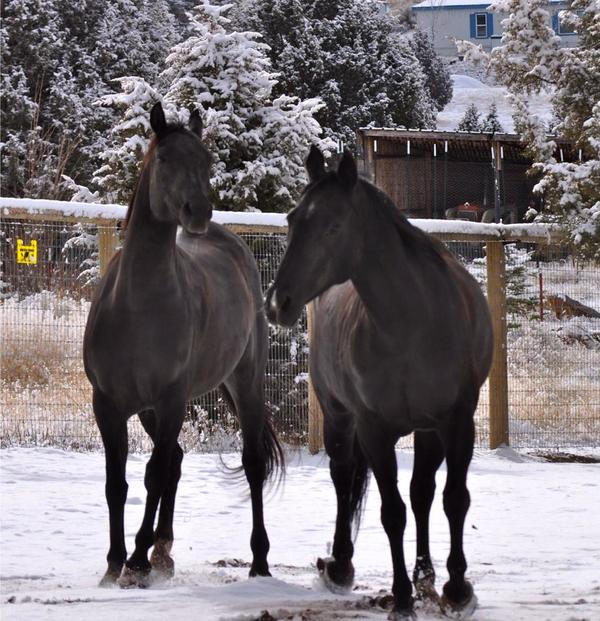 two horses in now
