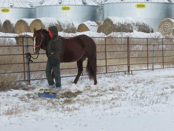 quarter horse in snow