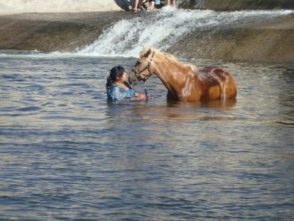 horse in river