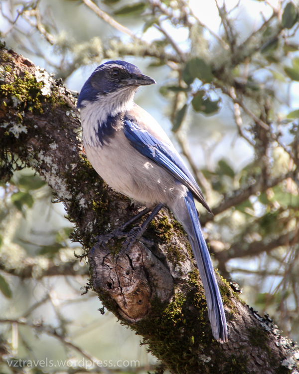 Today's Featured Birds – February 21st
