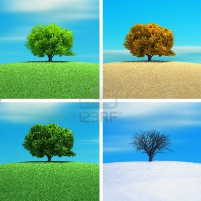 8626845-a-tree-in-four-season--3d-render.jpg