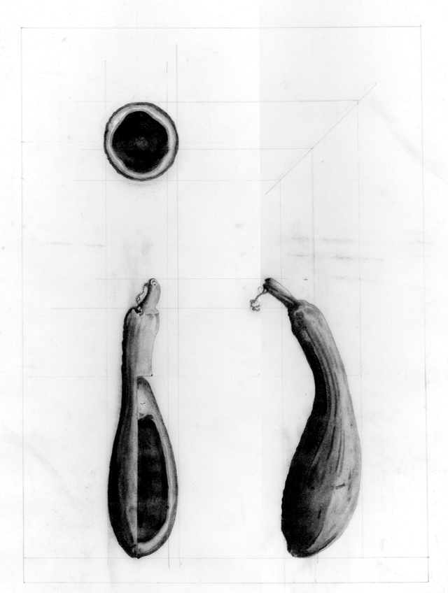Samuelson Peter - Bittergourd - Ex 1.jpg