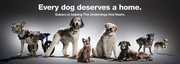 2020 Subaru Loves Pets / National #MakeADogsDay