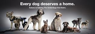 "Subaru of America spotlights the last to be adopted shelter dogs – the Underdogs – for the second annual ""National Make A Dog's Day"" on October 22, 2020."
