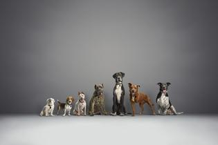 Subaru Announces Triple Wins for National Make a Dog's Day Campaign